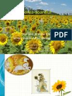 Floarea-soarelui 3