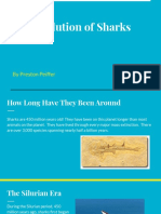the evolution of sharks