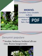 178899163-brebenei.pptx