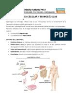 1.1 Guía - Teoría Celular y Biomoléculas.docx