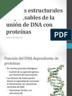185309076-Motivos-estructurales-responsables-de-la-union-de-DNA-pdf.pdf