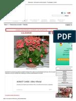 Kalanchoe - Informacion sobre la planta - Propiedades y cultivo