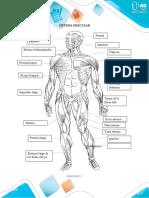Sistemas del cuerpo humano.