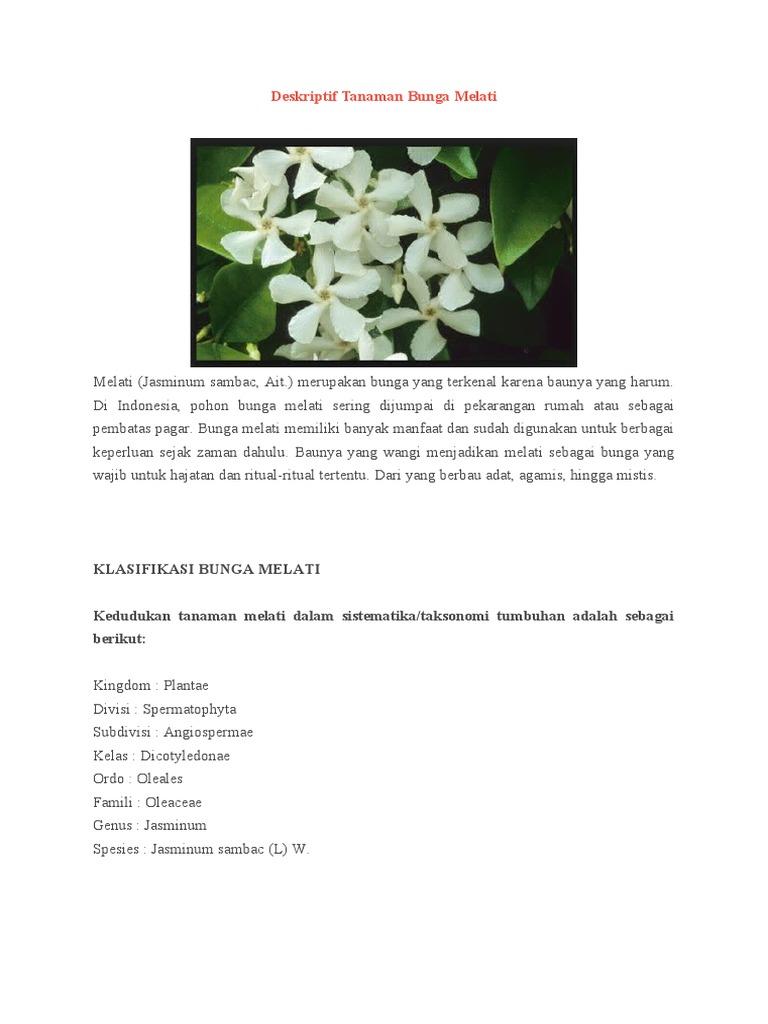 Deskriptif Tanaman Bunga Melati Docx