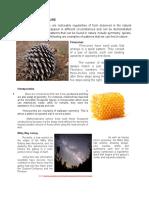 MODULE-1_Mathematics-in-Nature.docx