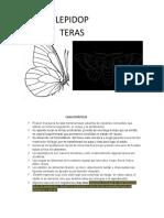 album insectos