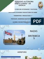 PARAMETROS PRODUCTIVOS 2