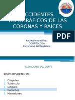 ACCIDENTES TOPOGRAFICOS DE LAS CORONAS Y RAÍCES (1).pptx