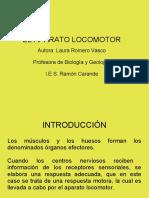 aparato_locomotor