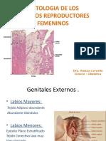HISTOLOGIA DE LOS ORGANOS REPRODUCTORES FEMENINOS.pptx