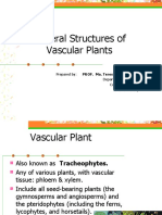 Lesson 2 Plant Body