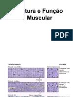 estrutura_e_funcao_muscular.ppt