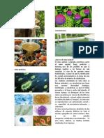 reino fung1.docxtraqueofitas