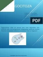 Презентация1.pptx