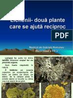 lichenii_doua_plante_care_se_ajuta_reciproc (2).ppt