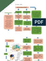 Mapa Conceptual Lectura de Las Funciones neurologicas