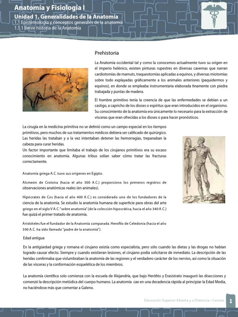 Encantador La Historia De La Anatomía Bosquejo - Imágenes de ...