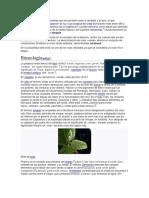 teoria del color verde