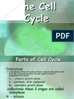 Cell cycle .ppt
