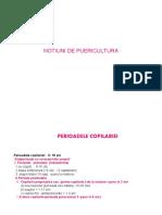Perioadele copilariei  2019-dr