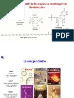 IV.5. ÁCIDOS NUCLEICOS