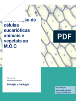 Relatório BG- Células.pdf