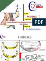 region anterior de cuello - cienciasmedic 2020 dr Pablo Licla.pdf