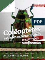 dp_coleopteres