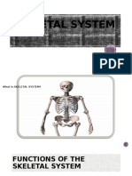 SKELETAL SYSTEM Kikigui,Fernandez,Fernandez, Pangda, Sagalla.pptx