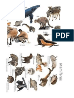 imagenes mamiferos