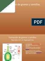 Granos y semillas.pptx