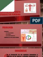 FISIOLOGÍA DEL APARATO REPRODUCTOR FEMENINO.pptx
