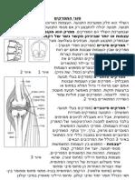 מפרקי הגוף