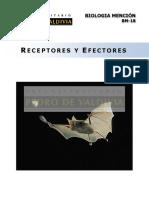 Receptores y efectores.pdf