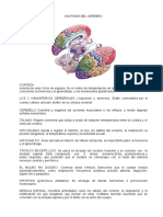 RESUMEN DE ESTRUCTURA DEL CEREBRO MANUEL FLORES