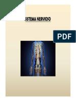 TRABAJO DE ANATOMÍA (1).pdf