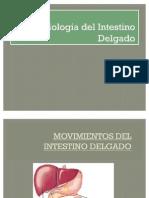 Movimientos Del Intestino Delgado