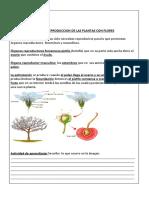 LA REPRODUCCION DE LAS PLANTAS CON FLORES DEFINITIVA
