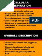 Cellular Respiration.pps