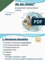 células.ppt