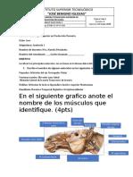 TRABANO 1 MIOLOGIA carlos.docx