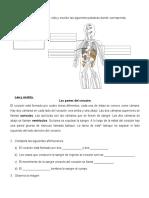 G CIENCIAS NATURALES 7-2020 - copia
