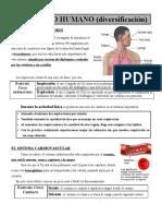 _El_cuerpo_humano_diversificacion