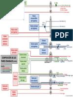 Composición de los pares craneales.pdf