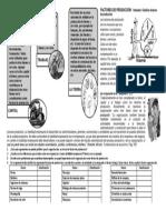 160774315-TALLER-DE-10-FACTORES-DE-PRODUCCION