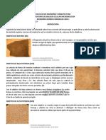PRACTICA 2 MICROSCOPIA (1).docx