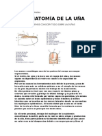 anatomia de las uñas.docx