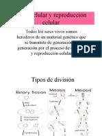 ciclo-celular-y-mitosis 6 de marzo.ppt