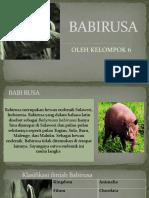 BABIRUSA KLPMPK 6