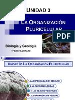 3. Organización pluricelular (1º Bach) 16-17.ppt